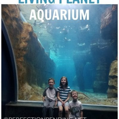 Why The Living Planet Aquarium Is The Best Adventure for Kids